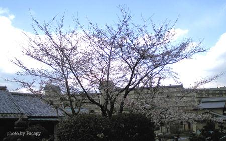 200803311