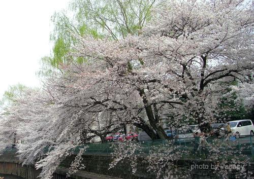 20090405maru2