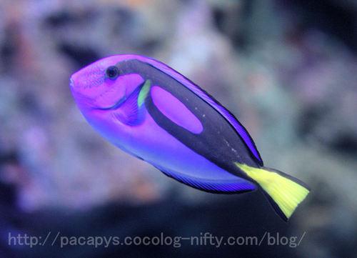 20100727fish1