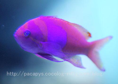 20100727fish2