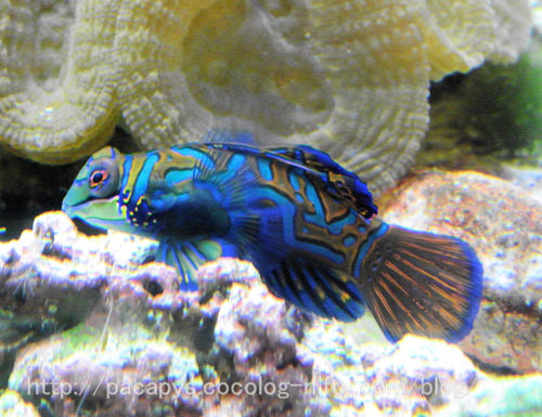 20100727fish4