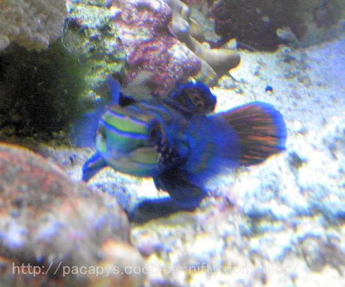 20100727fish5