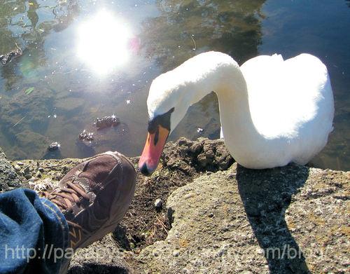 20110121hakutyou02