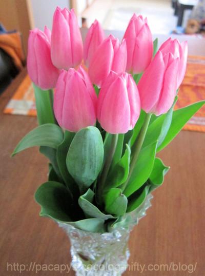 20120325flower01_2
