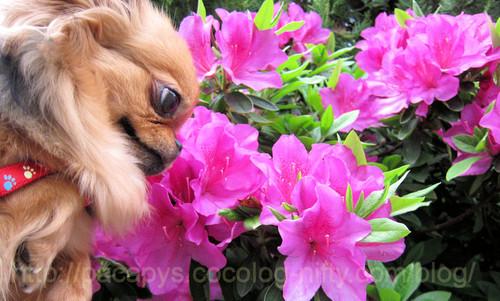 20120509flower02_2