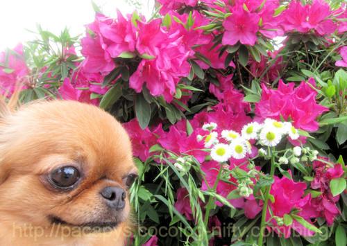20120509flower08