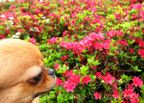 20120510flower11
