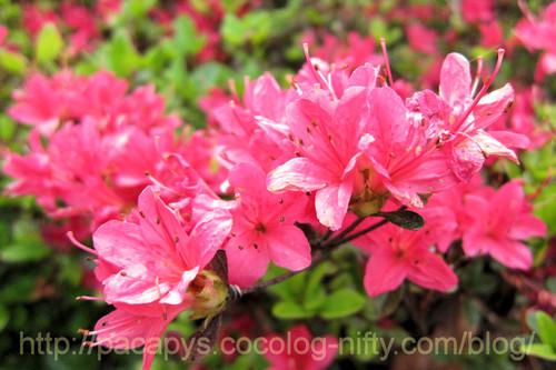 20120510flower12
