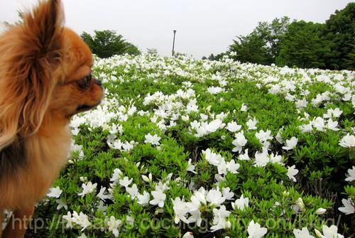 20120510flower14