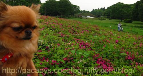 20120510flower16